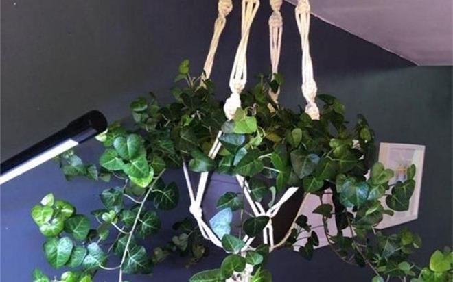 10 loại cây cảnh hút ẩm cho ngôi nhà của bạn